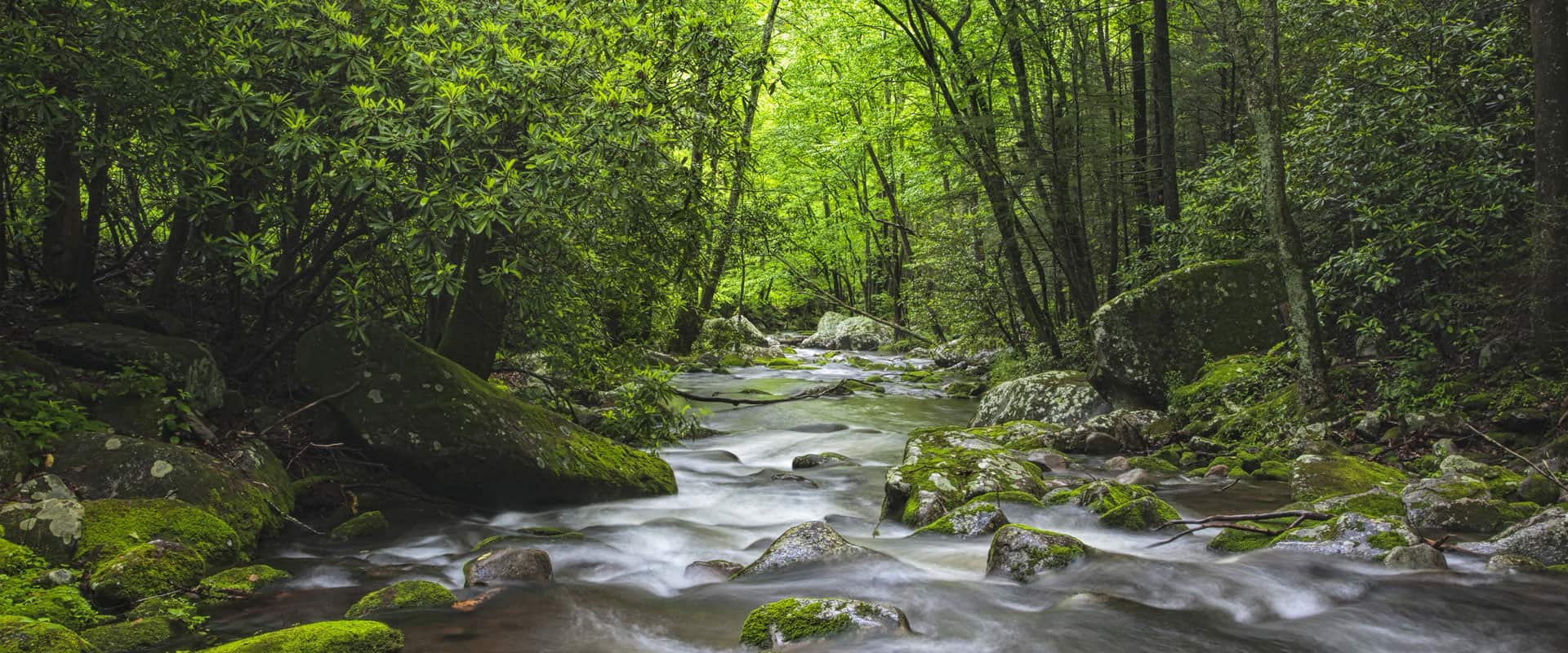 Hiking in the Smoky Mountain National Park