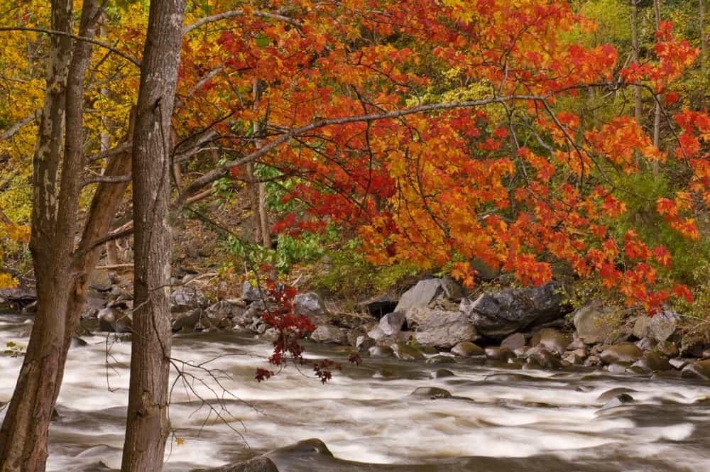 Fall scene of little pigeon river