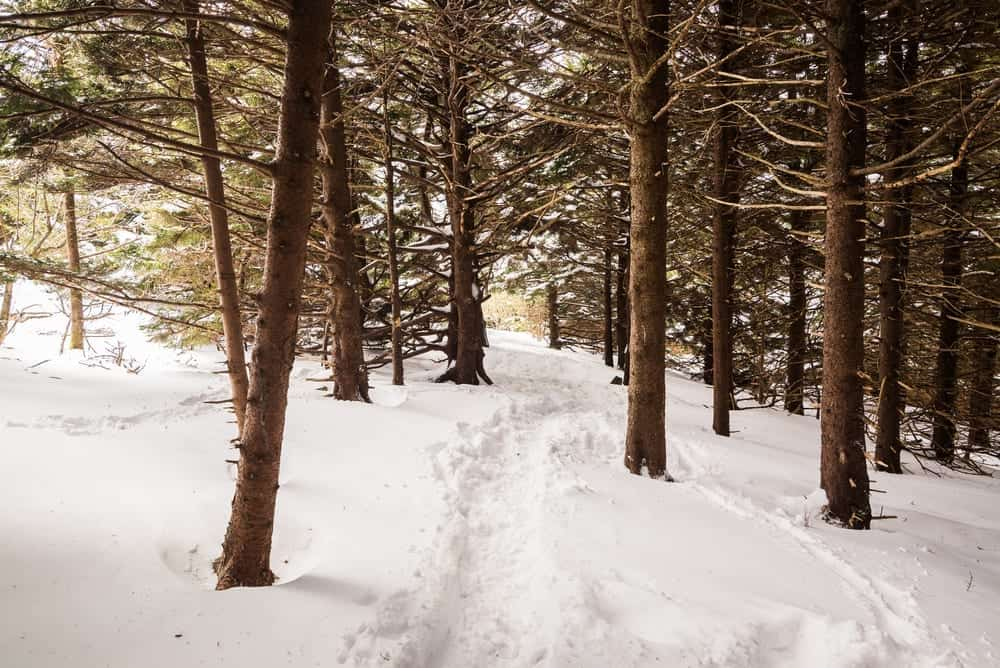 Snowy trail in the Smoky Mountains